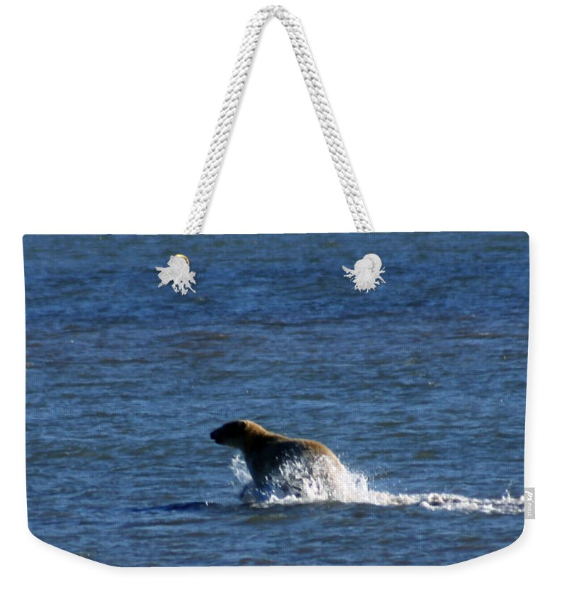 Bear Weekender Tote Bag featuring the photograph Polar Bear by Anthony Jones