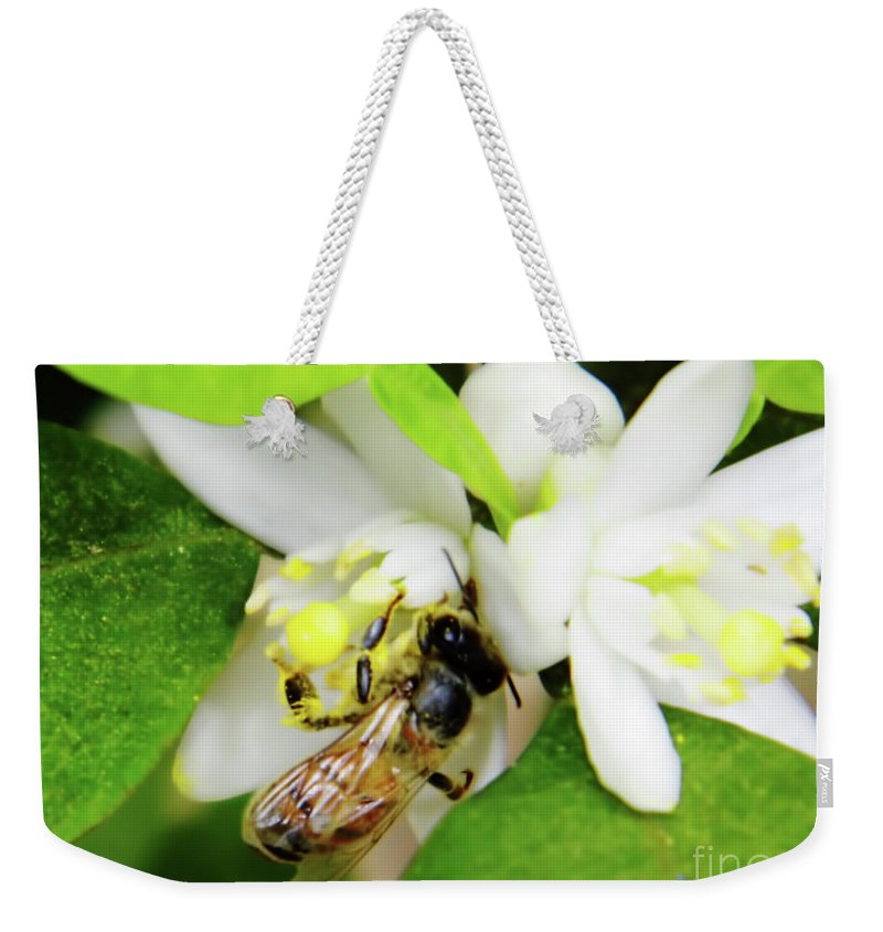 Orange Blossom Weekender Tote Bag featuring the photograph Pollen - Covered - Bee by D Hackett
