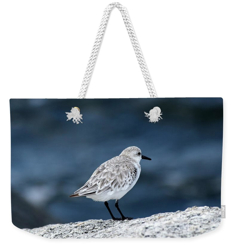 Bird Weekender Tote Bag featuring the photograph Pondering The Storm by William Tasker