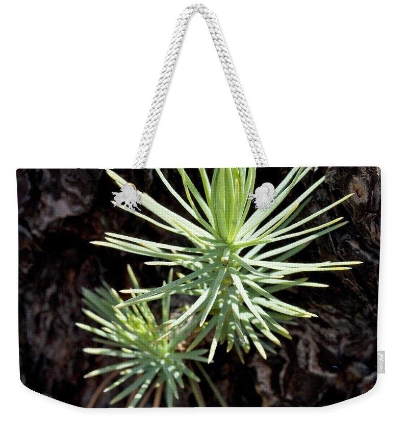 Ponderosa Weekender Tote Bag featuring the photograph Ponderosa Pine 3 by Kelley King