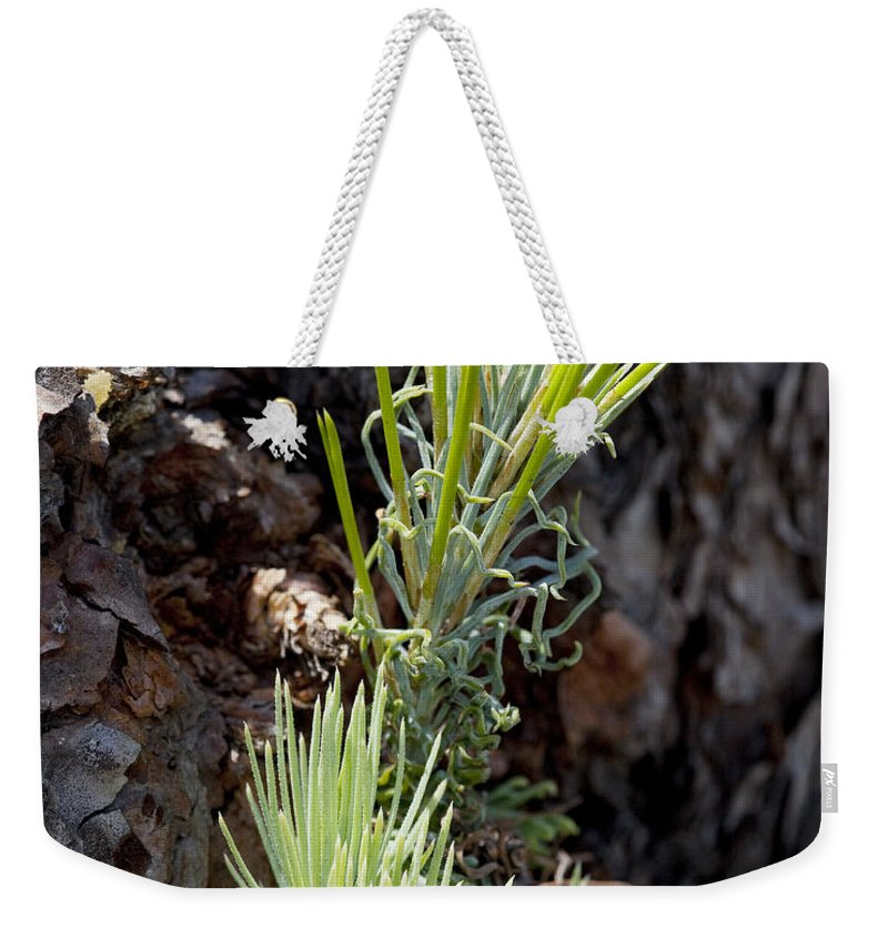 Ponderosa Weekender Tote Bag featuring the photograph Ponderosa Pine 8 by Kelley King