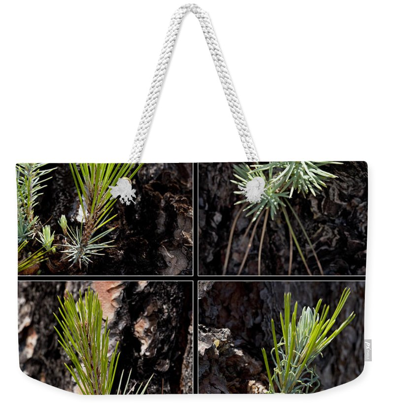 Ponderosa Weekender Tote Bag featuring the photograph Ponderosa Pine by Kelley King