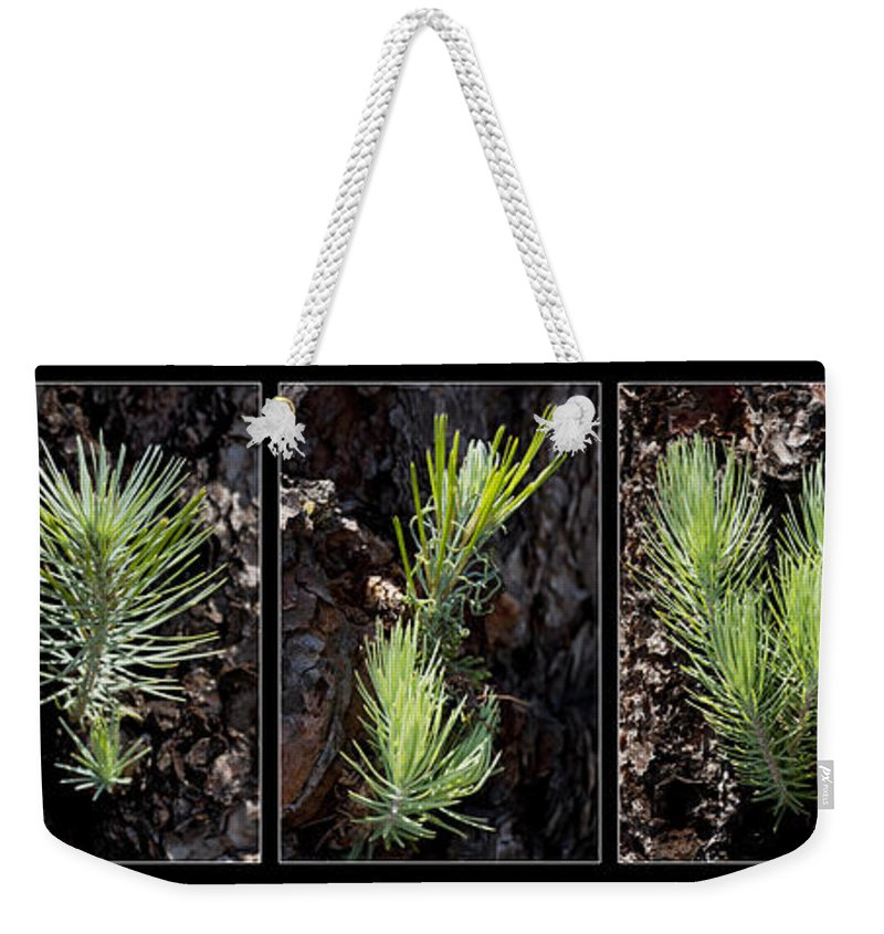 Ponderosa Weekender Tote Bag featuring the photograph Ponderosa Pine Wide by Kelley King