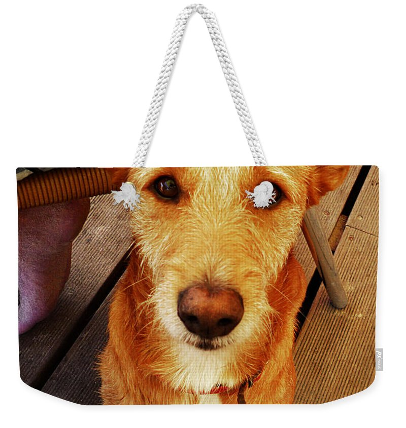 Pooch Weekender Tote Bag featuring the photograph Pooch by Charles Stuart