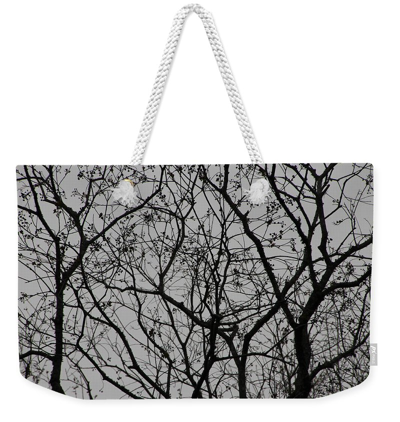 Tree Weekender Tote Bag featuring the photograph Popcorn Tree Budding by Laura Martin