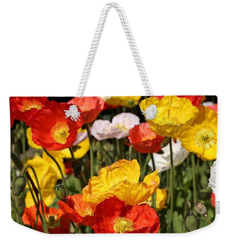 Poppy Weekender Tote Bag featuring the photograph Poppy Flower Garden by Debi Dalio