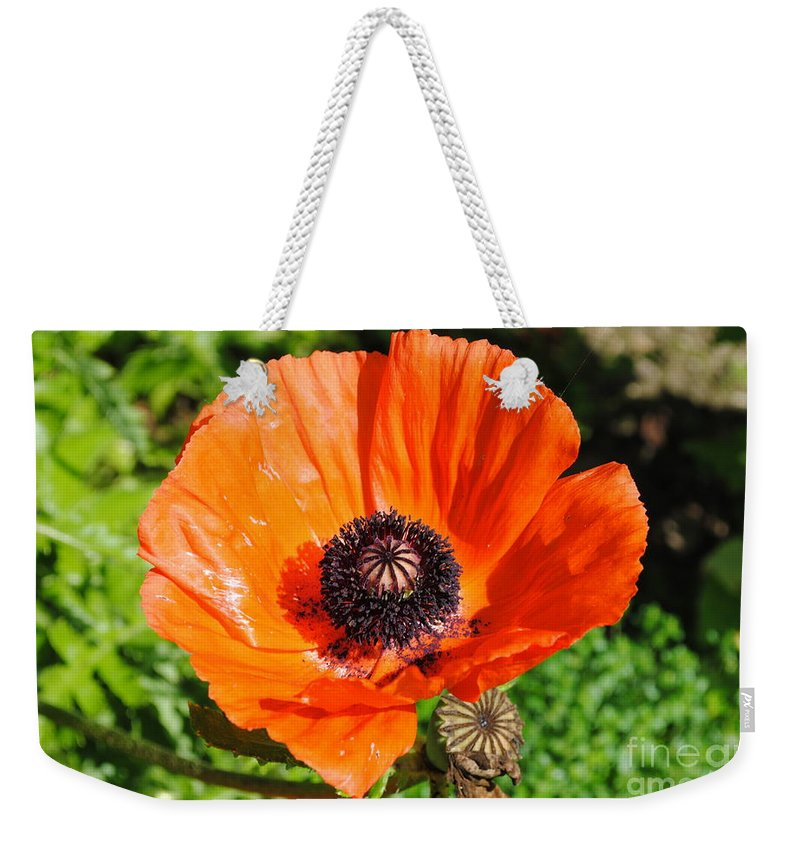 Poppy Weekender Tote Bag featuring the photograph Poppy by Jost Houk