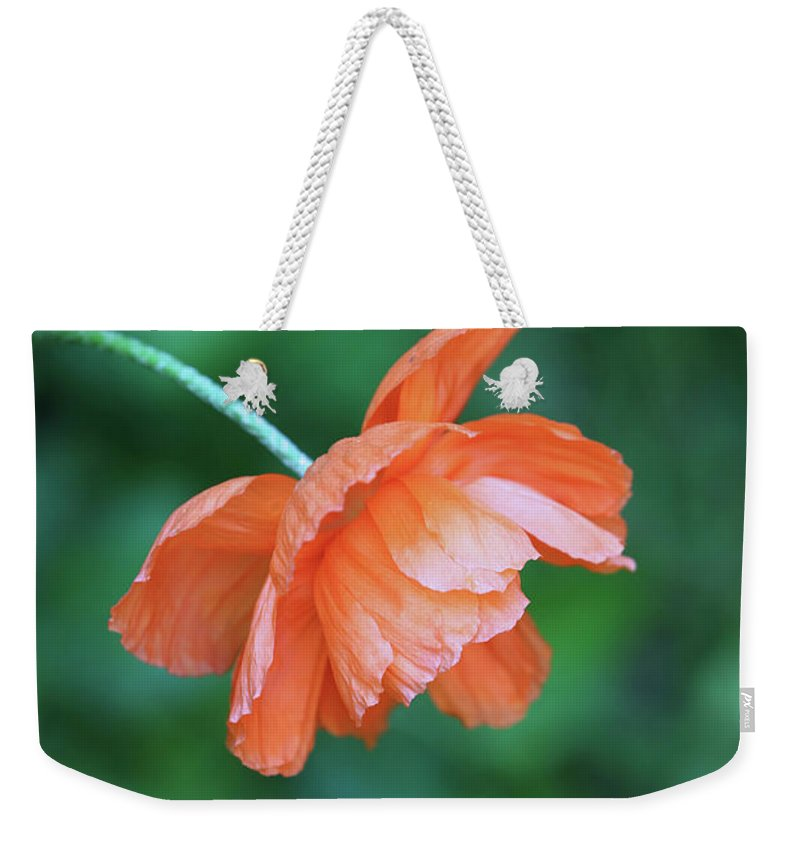 Nature Weekender Tote Bag featuring the photograph Poppy by Theresa Campbell