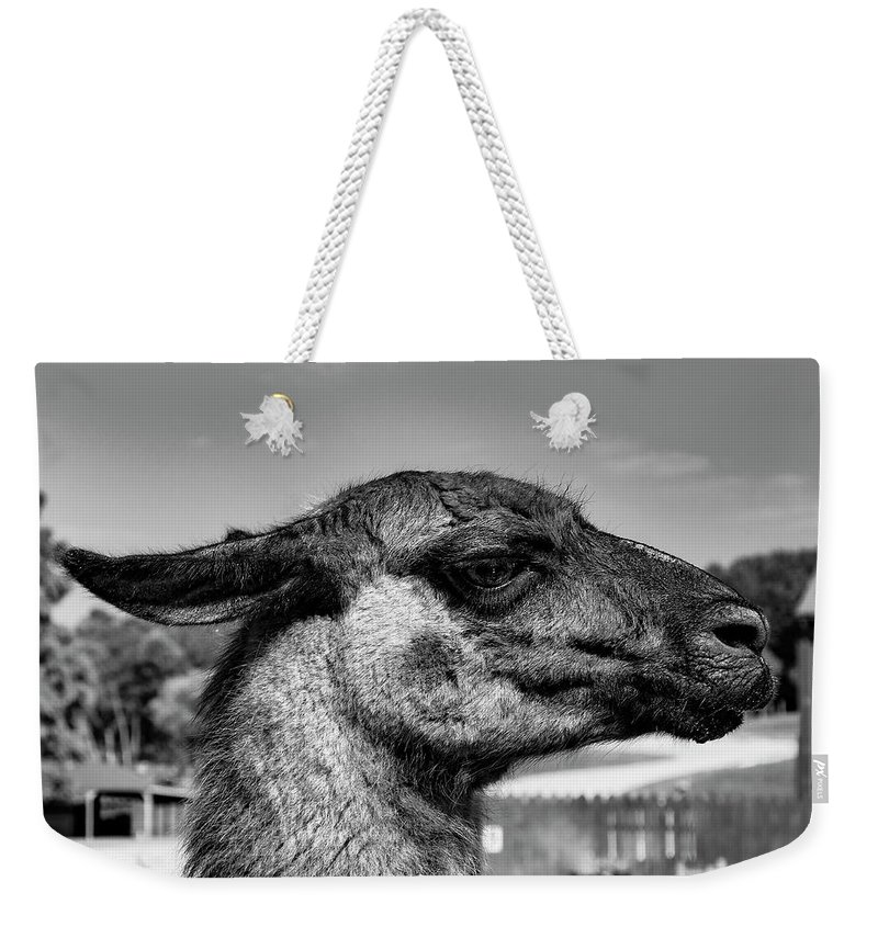 Wildlife Weekender Tote Bag featuring the photograph Portrait Of A Llama Mafia Leader by Shanna Robillard