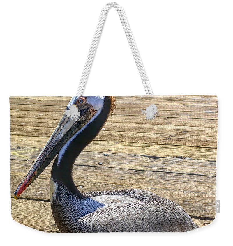California Weekender Tote Bag featuring the photograph Portrait Of A Pelican by Joe Lach
