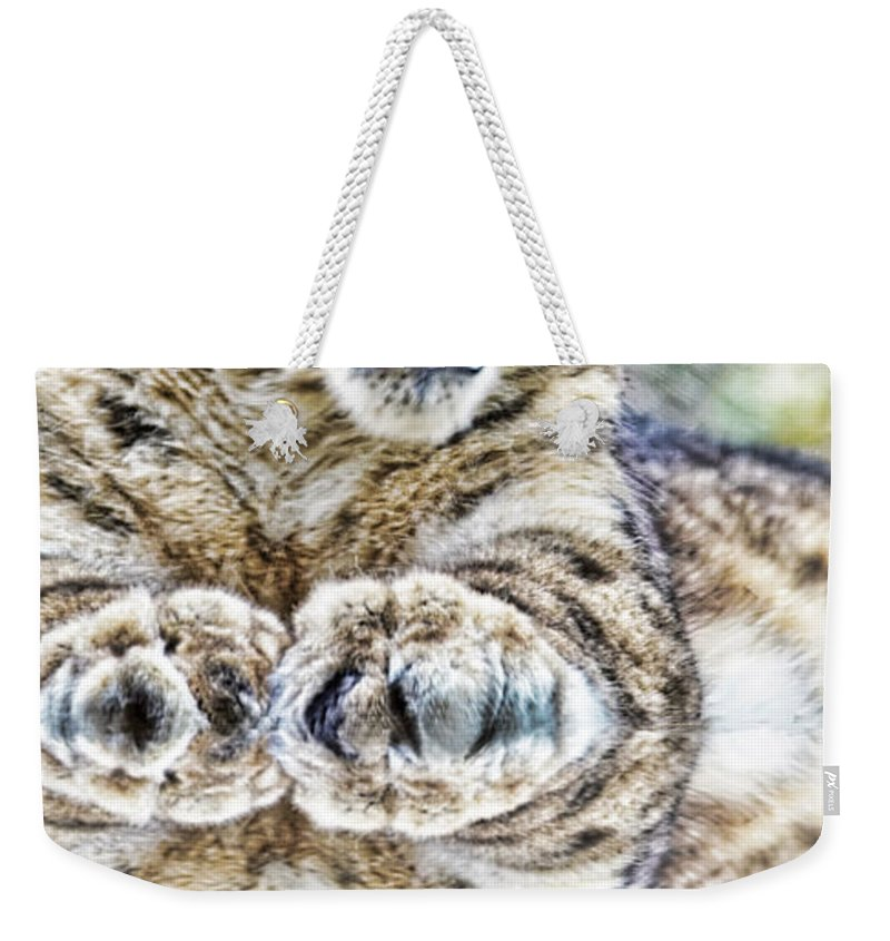 Snow Leopard Weekender Tote Bag featuring the photograph Portrait Of A Snow Leopard With A Reflection by Jim Fitzpatrick