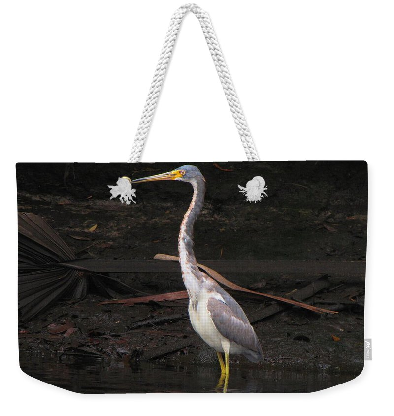 Tri-colored Heron Weekender Tote Bag featuring the photograph Portrait Of A Tri-colored Heron by Barbara Bowen