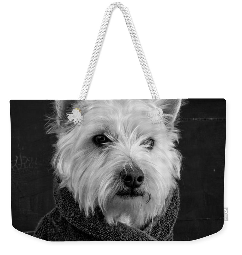 Animal Weekender Tote Bag featuring the photograph Portrait Of A Westie Dog 8x10 Ratio by Edward Fielding