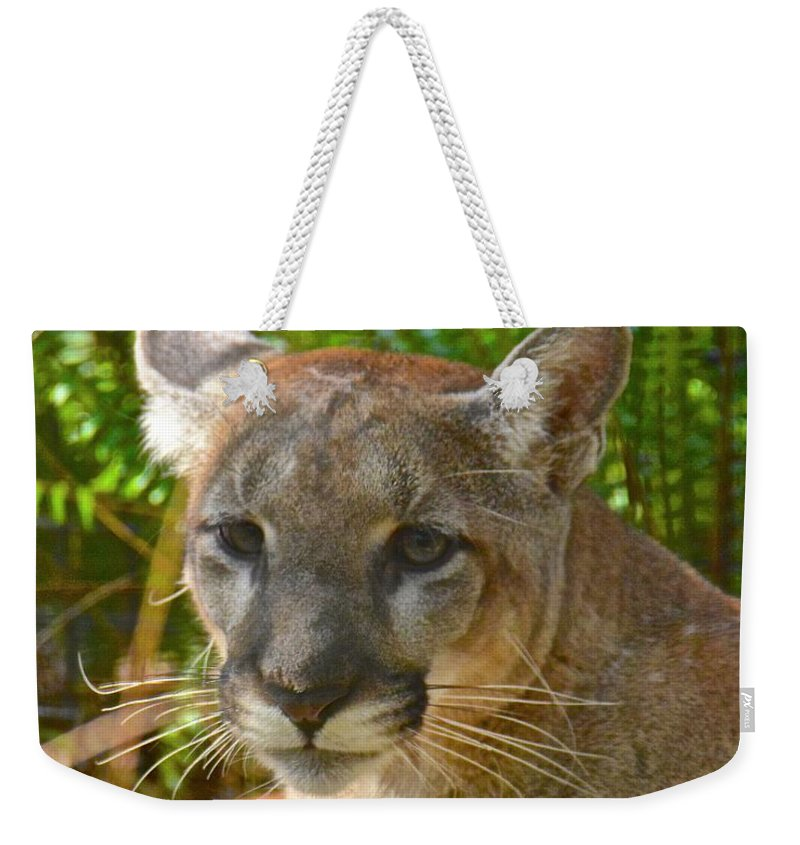Panther Weekender Tote Bag featuring the photograph Portrait Of A Young Florida Panther by Carol Bradley