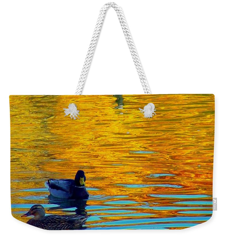 Ducks Malard Lake Gold Canada Geese Blue Weekender Tote Bag featuring the photograph Possibilities by Jack Diamond