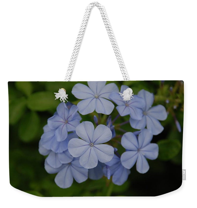 Macro Weekender Tote Bag featuring the photograph Powder Blue Flowers by Rob Hans