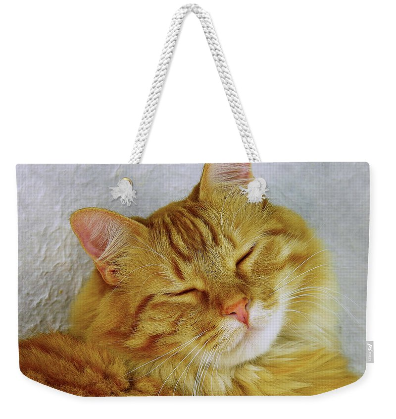 Cat Weekender Tote Bag featuring the photograph Pp Cat by Sumi Martin