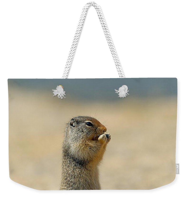 Prairie Dog Weekender Tote Bag featuring the photograph Prairie Dog by Sebastian Musial