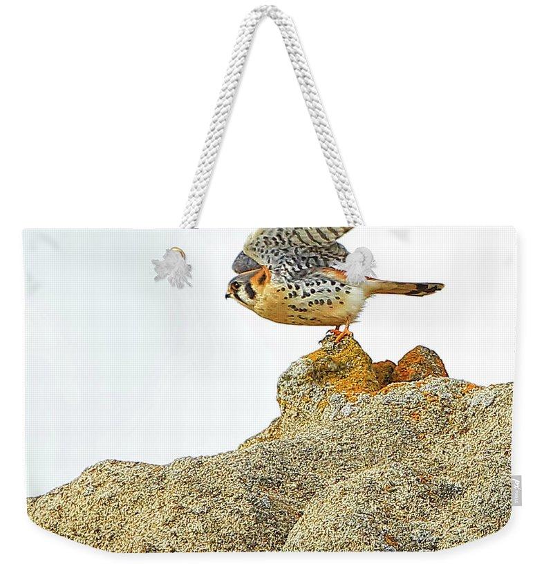 Falcon Weekender Tote Bag featuring the photograph Prairie Falcon by Edita De Lima