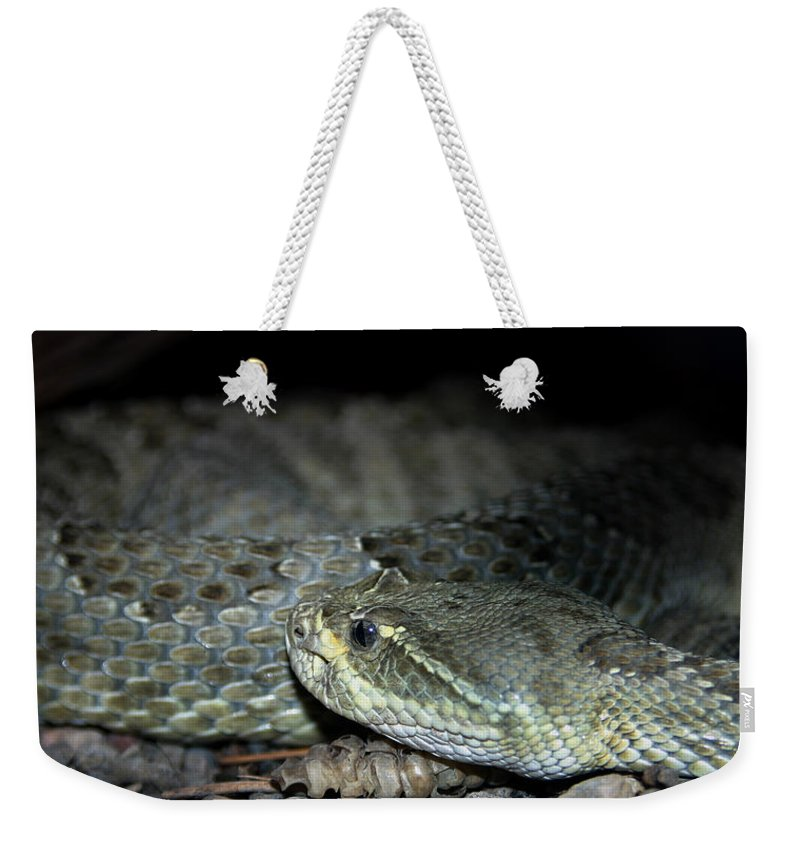 Snake Weekender Tote Bag featuring the photograph Prarie Rattle Snake by Anthony Jones