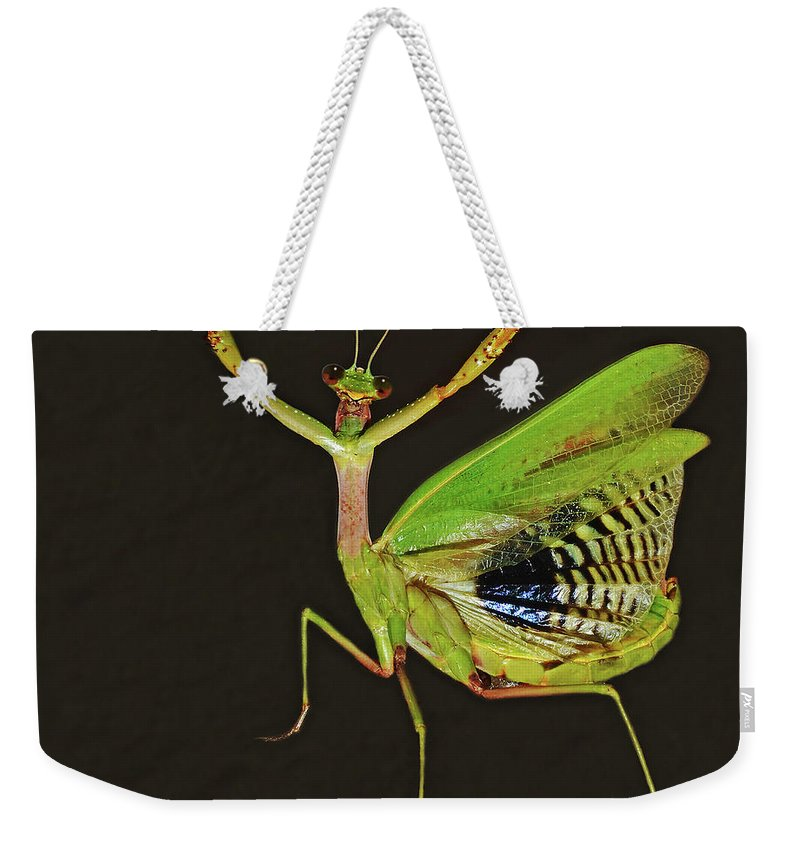 Mantis Weekender Tote Bag featuring the photograph Praying Mantis by Nicola Fusco