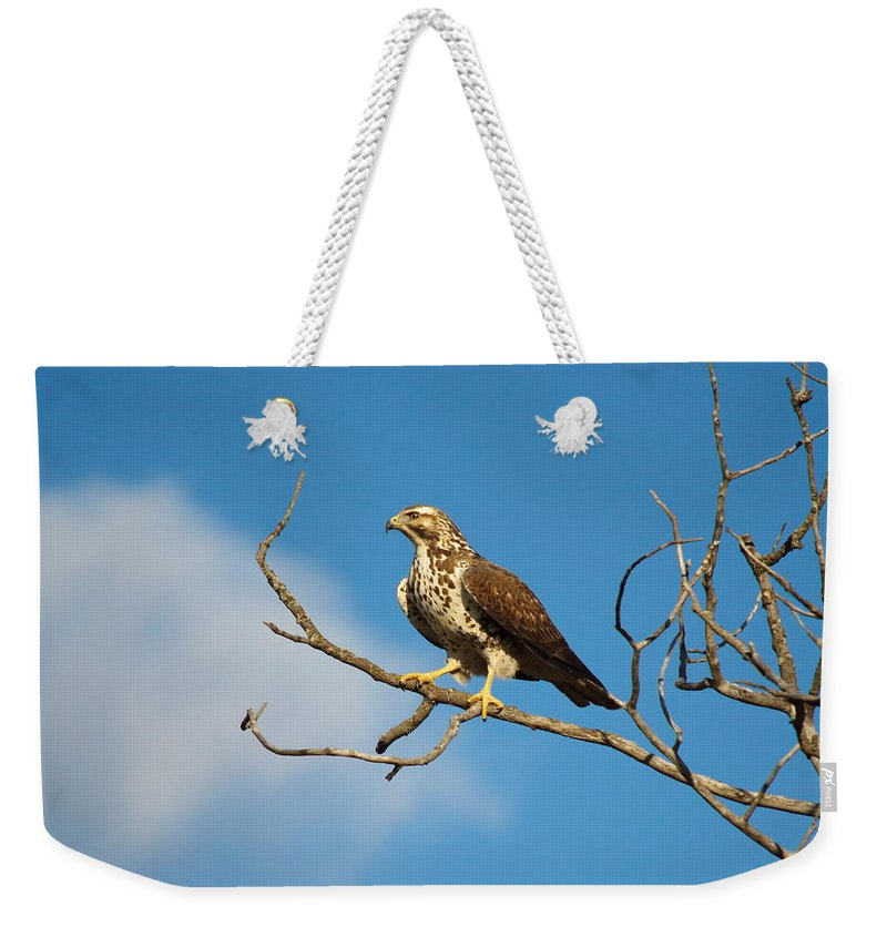 Nature Weekender Tote Bag featuring the photograph Pre-take Off Pose by Crystal Massop