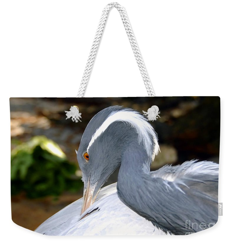 Bird Weekender Tote Bag featuring the photograph Preening Bird by David Lee Thompson