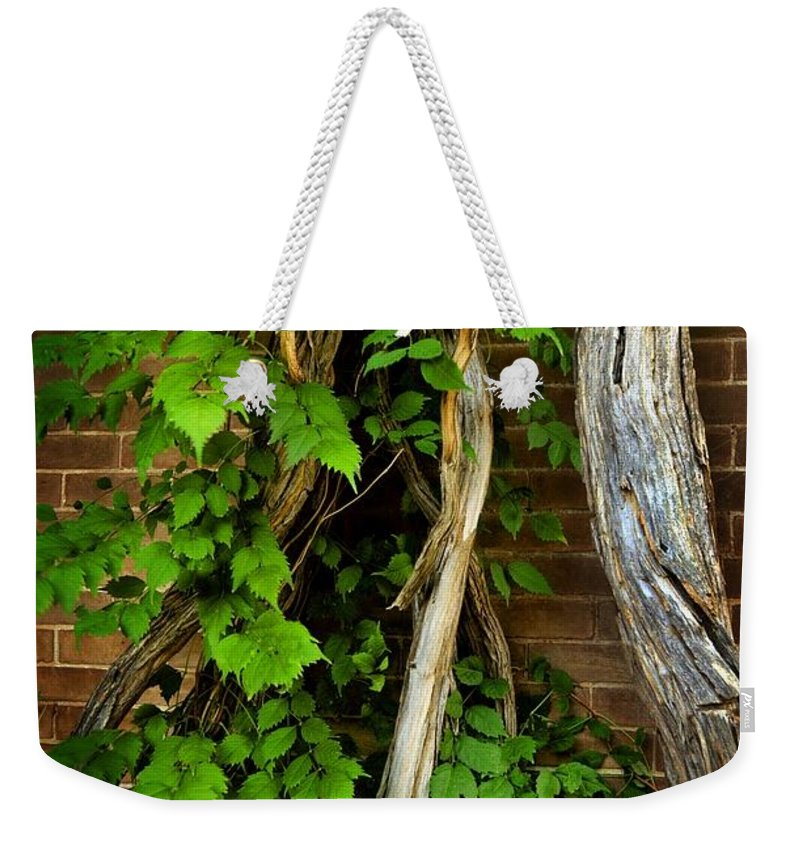 Preston Castle Weekender Tote Bag featuring the photograph Preston Wall Vine by Norman Andrus