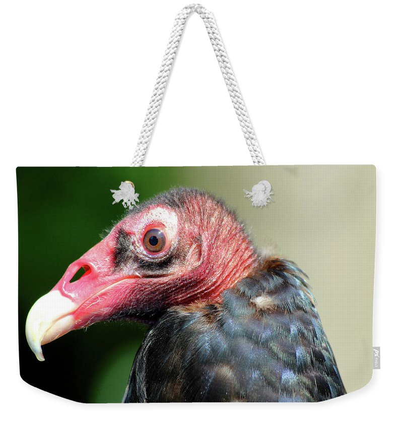 Vulture Weekender Tote Bag featuring the photograph Pretty by David Stasiak