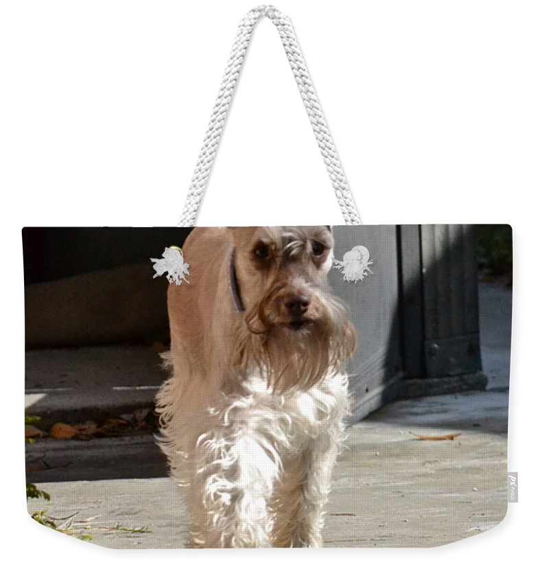 Dog Weekender Tote Bag featuring the photograph Pretty Pup by Carol Bradley