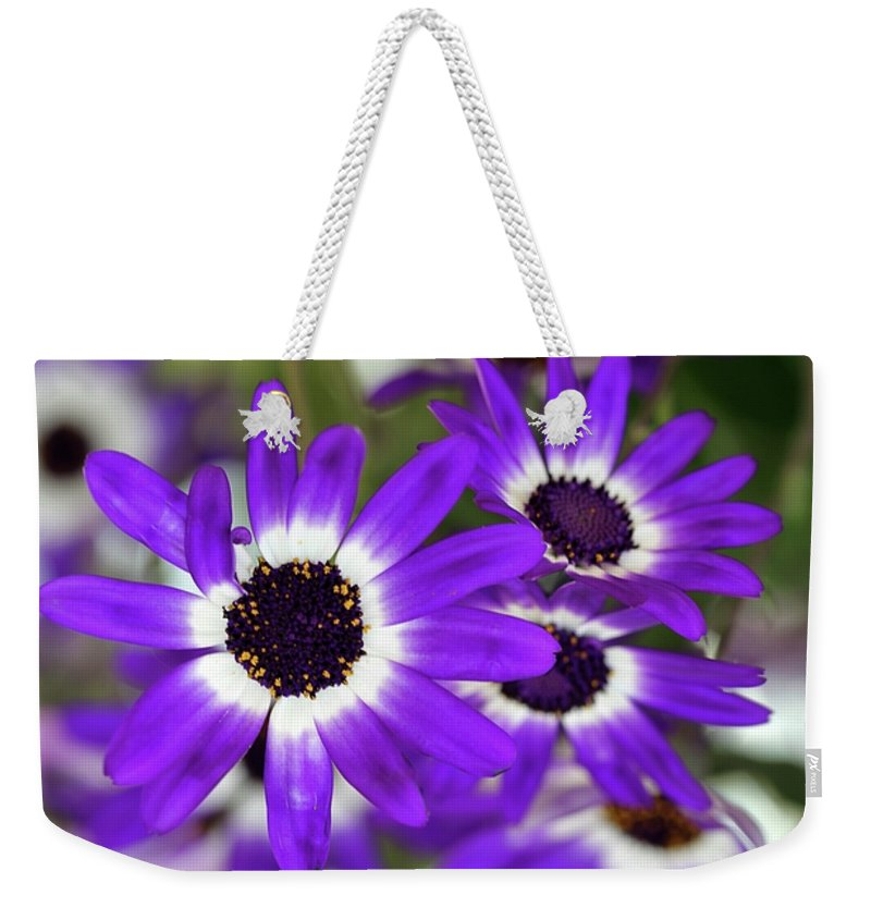 Flower Weekender Tote Bag featuring the photograph Pretty Purple Daisies by Sabrina L Ryan