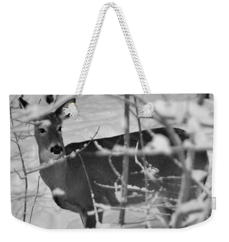 Deer Weekender Tote Bag featuring the photograph Priceless by Barbara S Nickerson