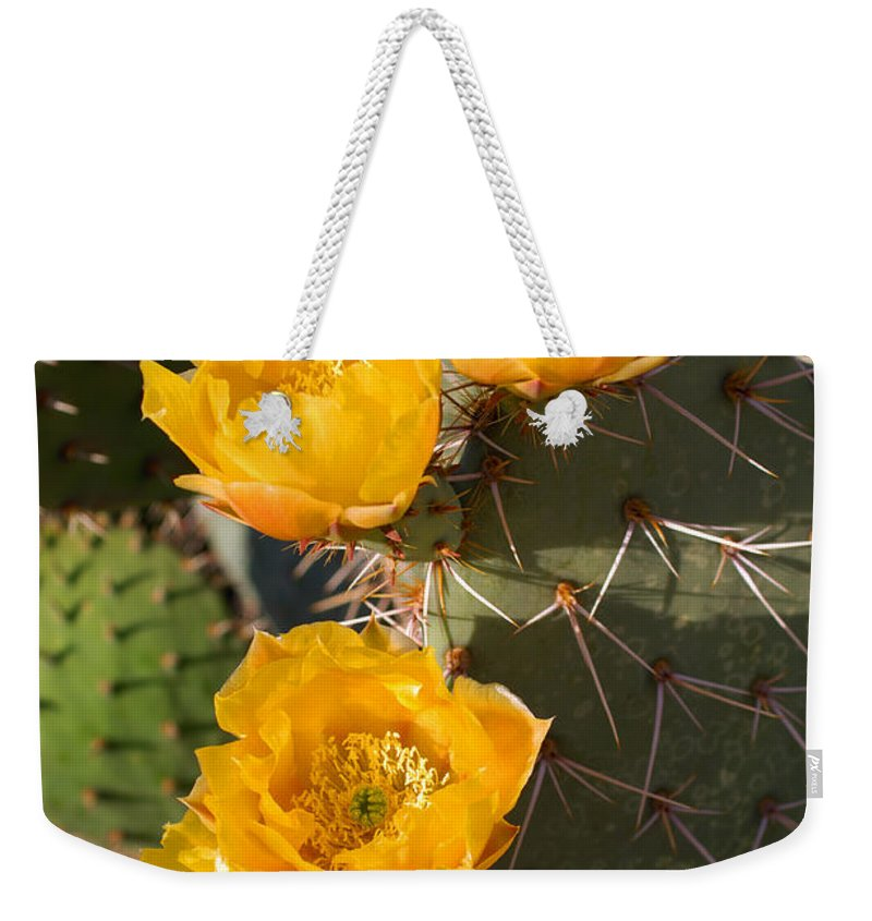 Cactus Weekender Tote Bag featuring the photograph Prickly Pear Cactus Flowers by Jill Reger