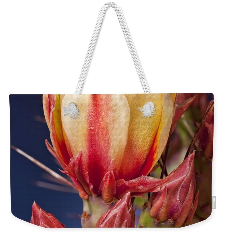 Prickly Pear Weekender Tote Bag featuring the photograph Prickly Pear Flower by Kelley King