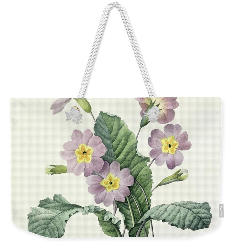 Primula Weekender Tote Bag featuring the drawing Primrose by Pierre Joseph Redoute