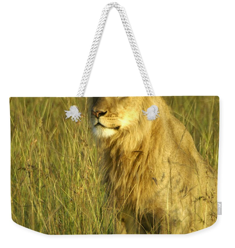 Africa Weekender Tote Bag featuring the photograph Princely Lion by Michele Burgess