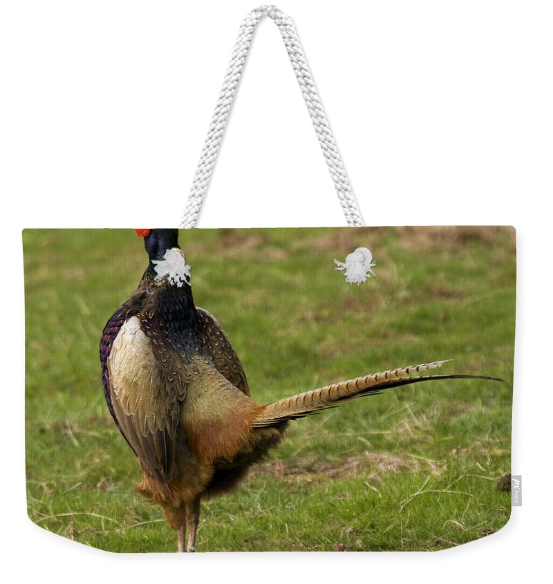 Pheasant Weekender Tote Bag featuring the photograph Private Pheasant by Angel Ciesniarska