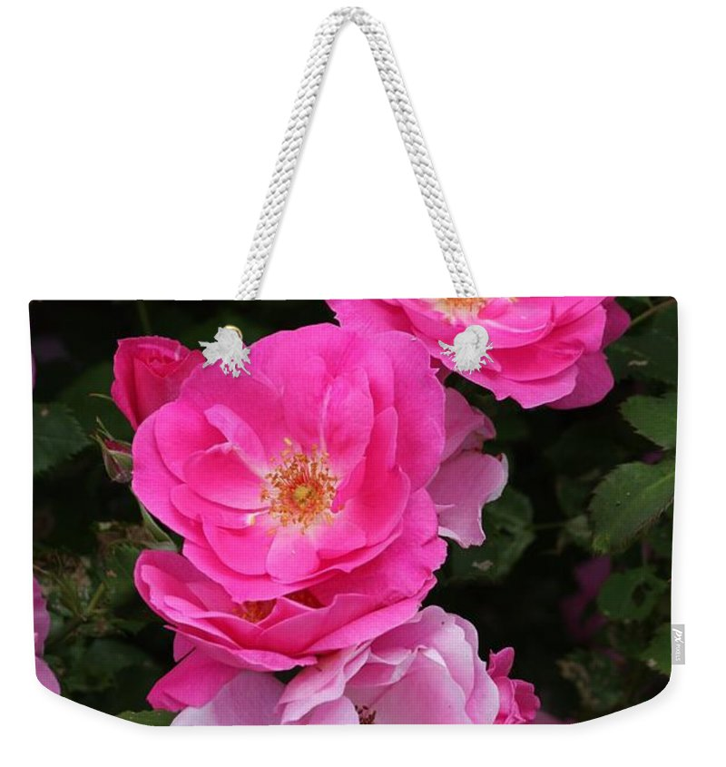 Rose Weekender Tote Bag featuring the photograph Profusion Of Pink by Doris Potter