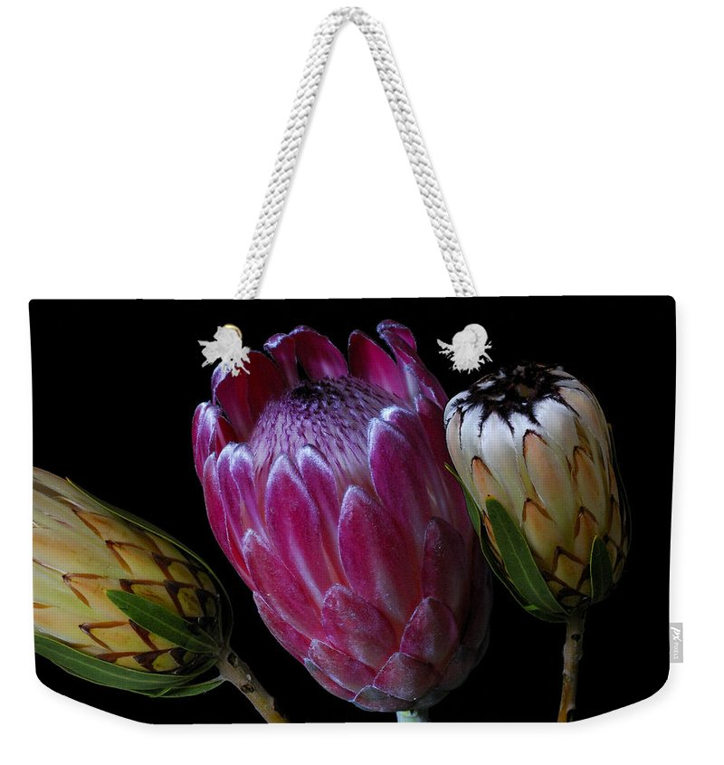 Proteas Weekender Tote Bag featuring the photograph Proteas by Wayne Sherriff