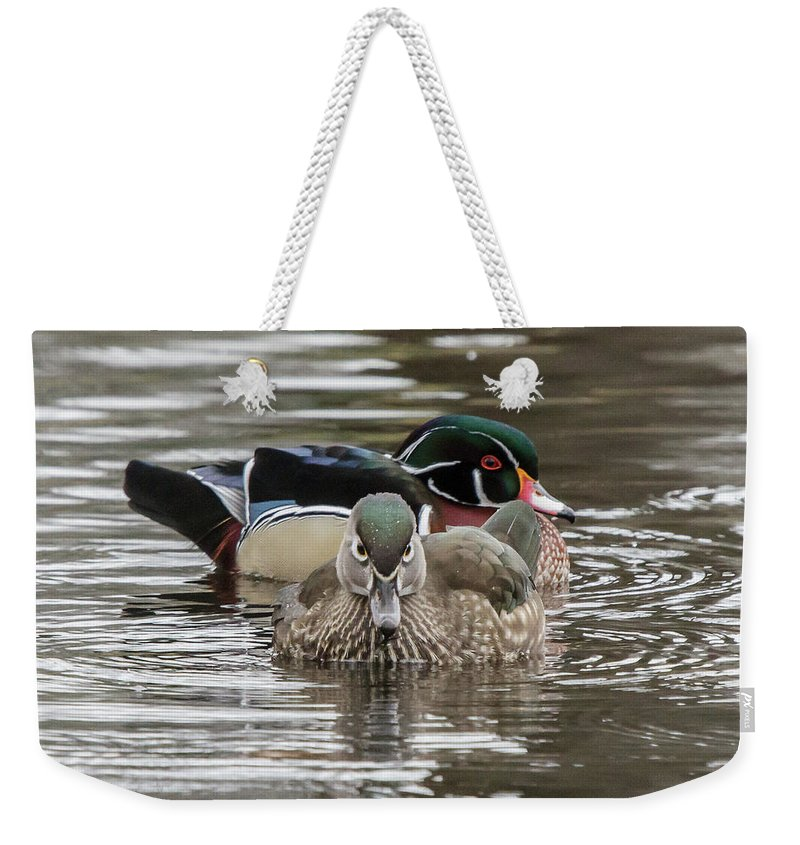 Wildlife Weekender Tote Bag featuring the photograph Protecting by Barbara Blanchard