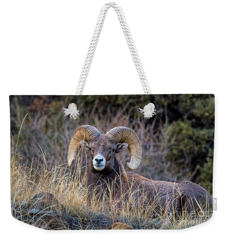 Bighorn Ram Weekender Tote Bag featuring the photograph Proud Patriarch by Jim Garrison