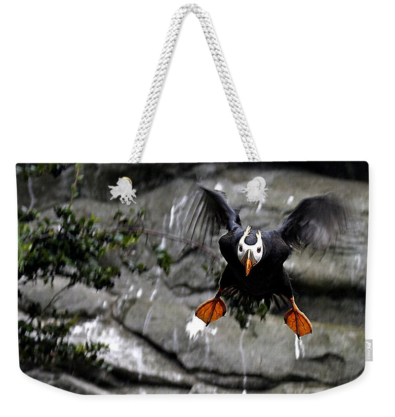 Flying Puffin Weekender Tote Bag featuring the photograph Jumpin Puffin by Jean Noren
