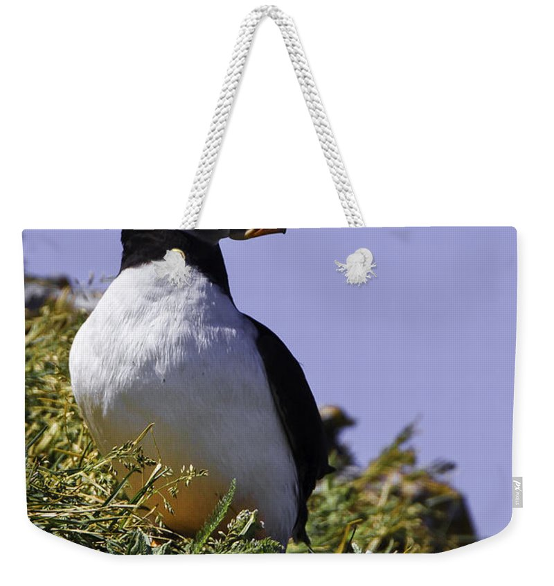 Iles Mingans Weekender Tote Bag featuring the photograph Puffin On The Rock by Marie Elise Mathieu