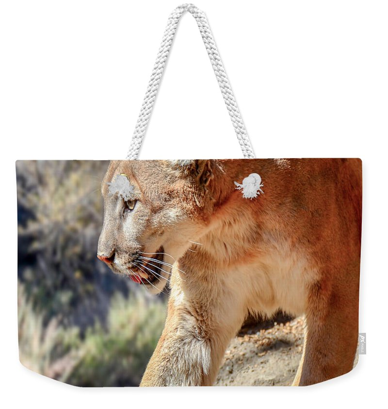 Nature Wear Weekender Tote Bag featuring the photograph Puma Mountain Lion Nature Wear by LeeAnn McLaneGoetz McLaneGoetzStudioLLCcom