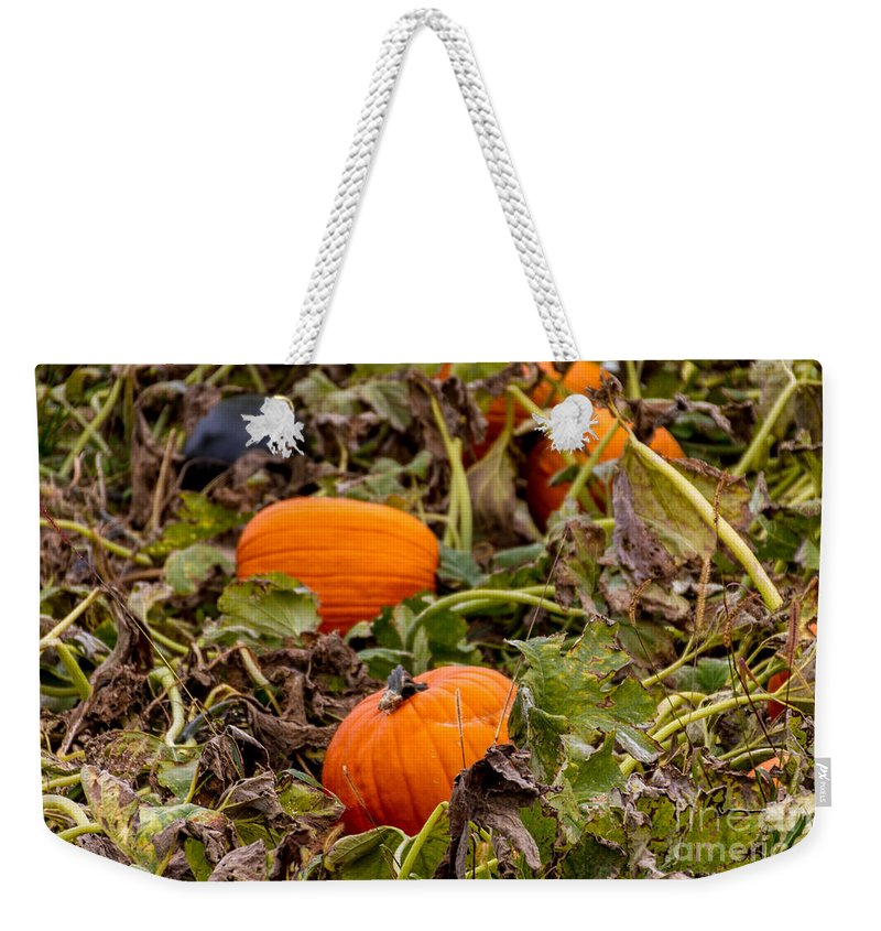 Pumpkin Weekender Tote Bag featuring the photograph Pumpkins by William Norton