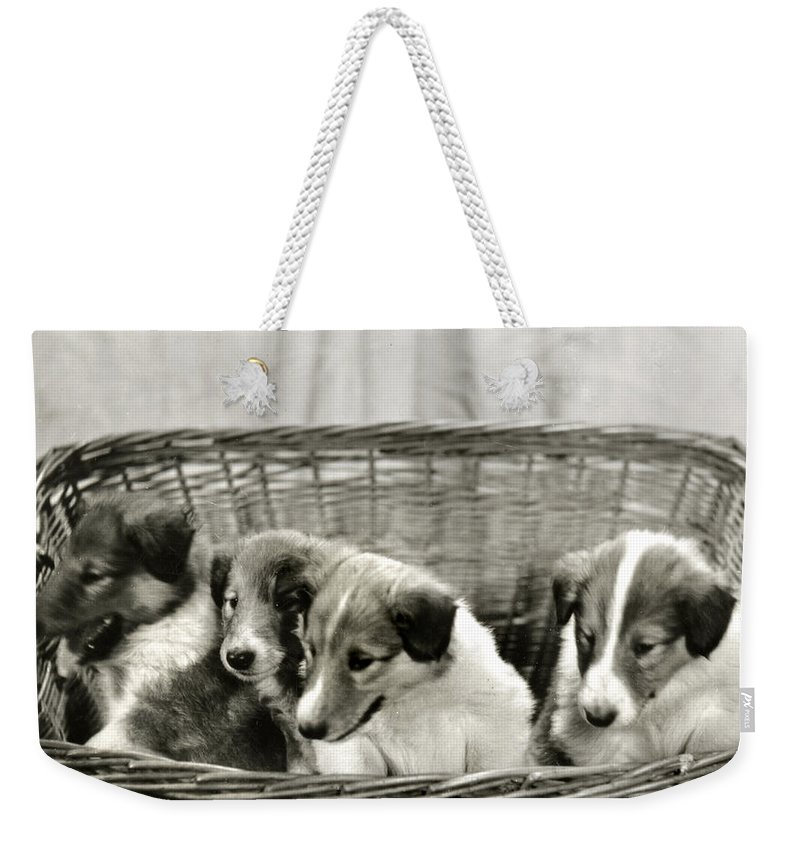 Vintage Weekender Tote Bag featuring the photograph Puppies Of The Past by Marilyn Hunt