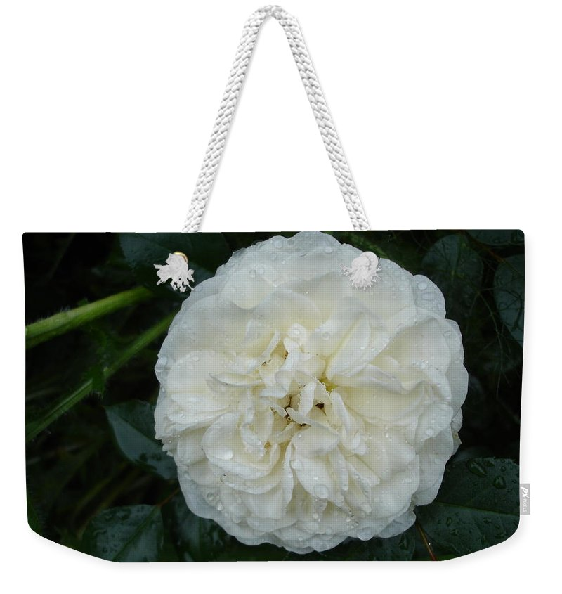Rose Weekender Tote Bag featuring the photograph Purity And Perfection by Susan Baker