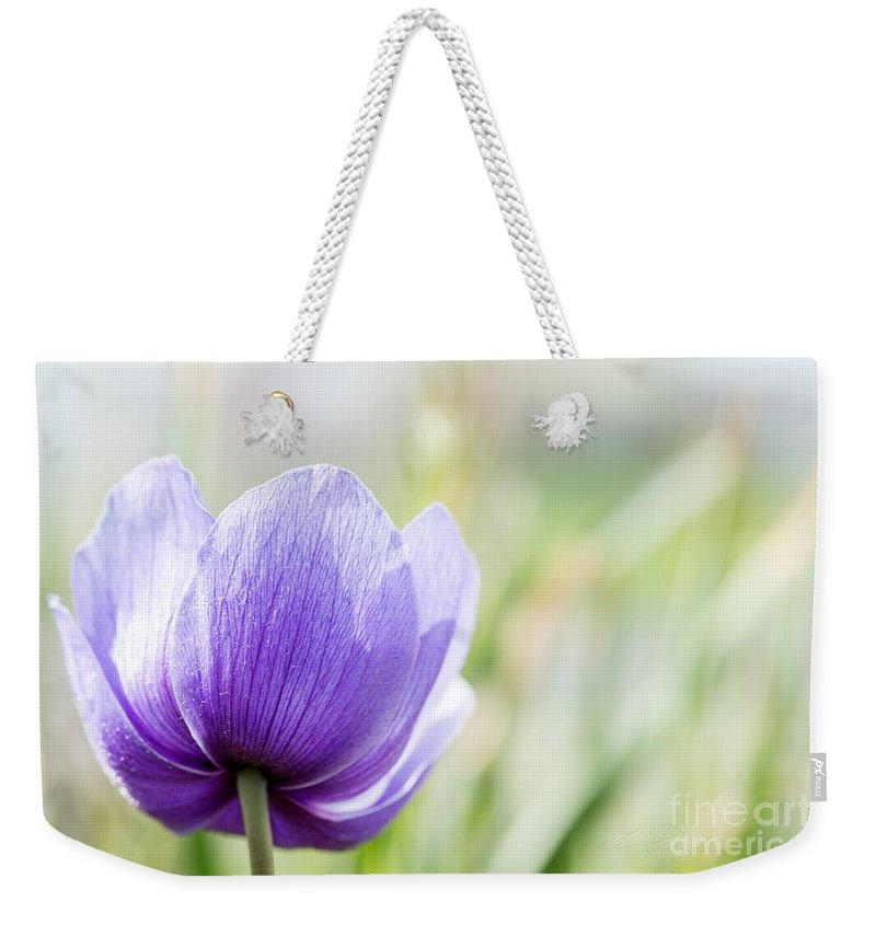 Purple Anemore Flower Weekender Tote Bag featuring the photograph Purple Anemore Flower by Iris Richardson