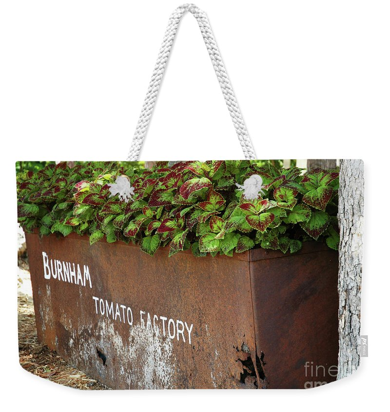 Branson Weekender Tote Bag featuring the photograph Purple-edged Coleus by Kathy Carlson