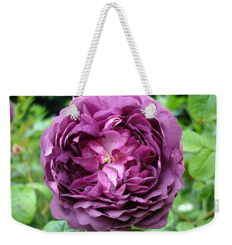 Rose Weekender Tote Bag featuring the photograph Purple English Rose by Susan Baker